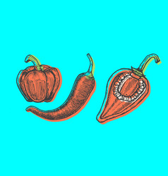 hand drawn of peppers set sketch style doodle vector image