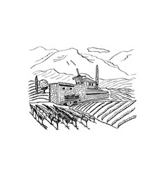 hand drew of vineyard landscape with house vector image