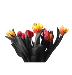 Tulip flowers isolated on white background vector image