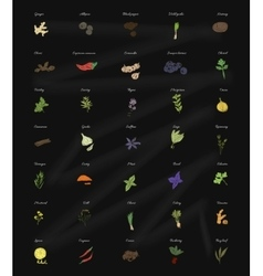 Collection of herbs and spices for the kitchen on vector