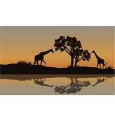 Giraffe at sunset scenery vector