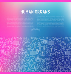 human internal organs concept with thin line icons vector image
