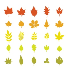 Set of colorful autumn leaves Leaf collection vector image