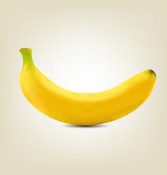 photorealistic yellow banana vector image