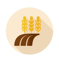 Ears of Wheat Barley or Rye on Field flat icon vector image vector image