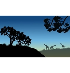 Silhouette of tree and giraffe vector image vector image