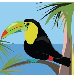 Beautiful toucan bird sitting on a palm tree vector image