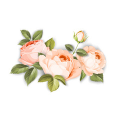 a spring decorative bouquet roses flowers vector image