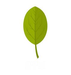apple leaf icon flat style vector image