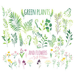 big set of flat green leaves twigs and flowers vector image