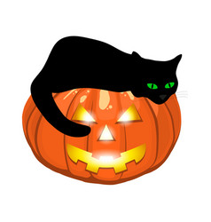 black cat lies on an evil pumpkin jack lantern for vector image