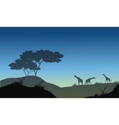 Silhouette of hills and giraffe vector image