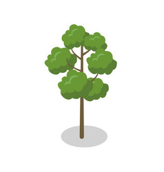 Tall green tree isometric 3d element vector