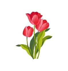 Tulip Hand Drawn Realistic vector image vector image