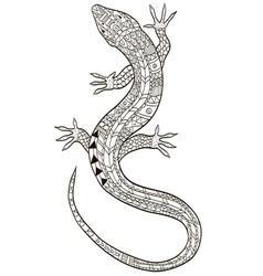 lizard coloring for adults vector image vector image