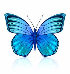 butterfly insect isolated vector image