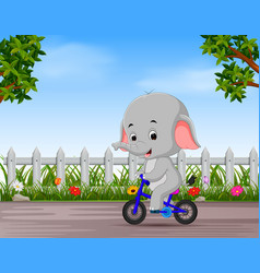Funny elephant cycling in the road vector