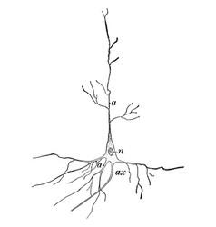 Nerve cell vintage vector