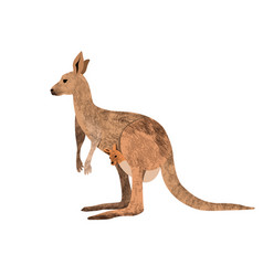 Red kangaroo carrying a cute joey isolated on vector