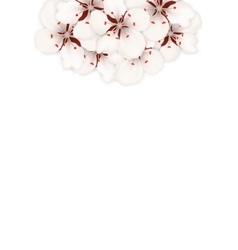 Spring background with cherry blossom place for vector