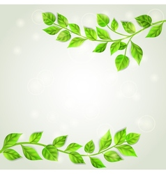 Branches with green leaves vector image