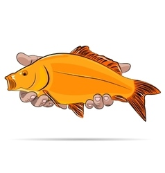 Gold fish in a hands vector image