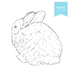 hand drawn with rabbit vector image