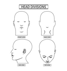 Man head divisions scheme vector