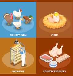 poultry 2x2 design concept vector image