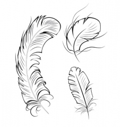 three contour feathers vector image vector image