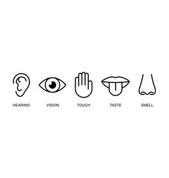 A set of icons of the five human senses hearing vector