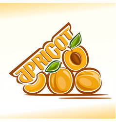 apricot still life vector image