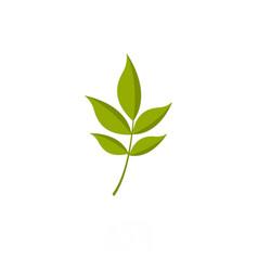 Ash leaf icon flat style vector