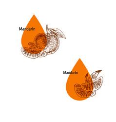 Mandarin peel oil icon set hand drawn sketch vector