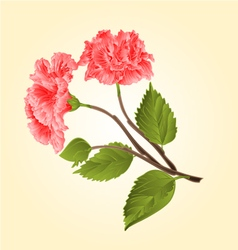 Pink hibiscus stem tropical flower vector image
