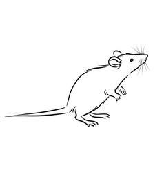 Rat sketch image on white background vector