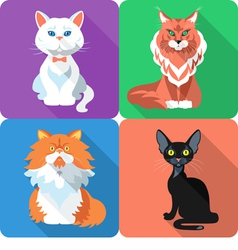 Set icon cat flat design vector