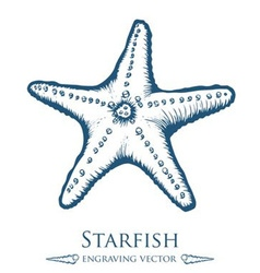 Starfish Drawing vector image