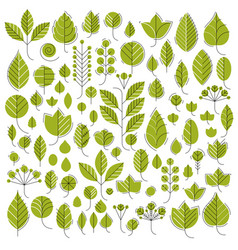 green tree leaves isolated on vector image vector image