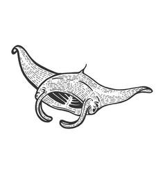 Giant oceanic manta ray sea water animal sketch vector