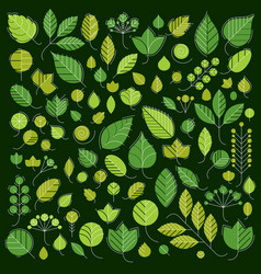 Green tree leaves isolated on vector