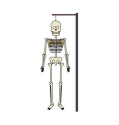 human skeleton icon image vector image