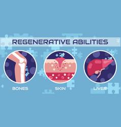 regenerative abilities human medicine vector image