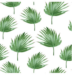 tropical palms white background seamless pattern vector image
