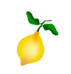 A fresh lemon on a white background vector