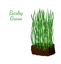 Barley grass wheat cartoon flat style vector