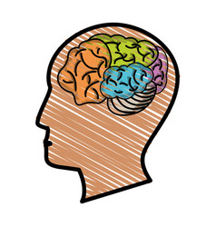 drawing head profile brain vector image