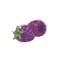 Ripe blackberry isolated icon vector