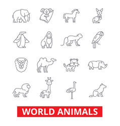 World animals giraffe zebra zoo parrot hippo vector