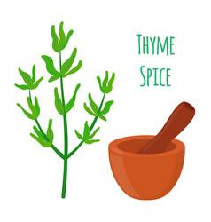 thyme spice mortar pestle cartoon style vector image vector image